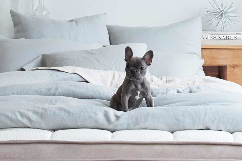 Mattress with Room To Spare for Your Puppy Dog