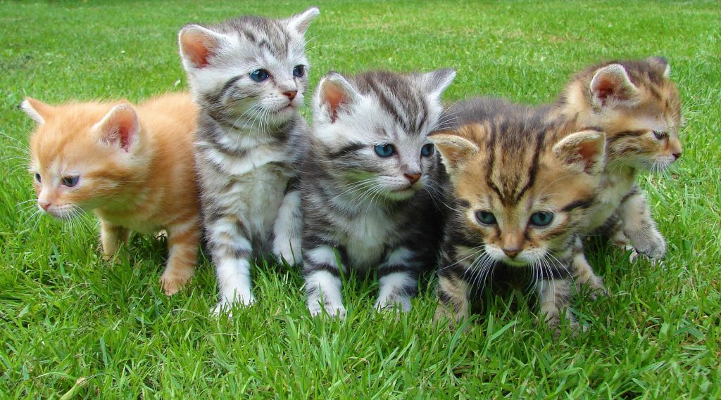 Cats and kittens will provide plenty of used kitty litter to put down groundhog holes.