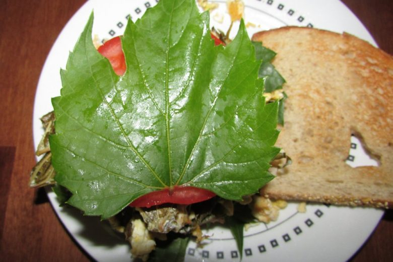 Wild Grape Leaf Topping Off Scrambled Egg Sandwich