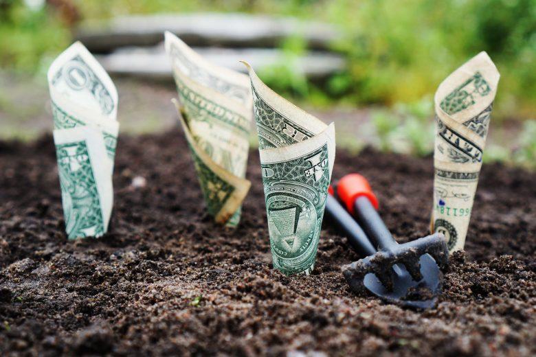 Money plants